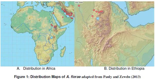 Assessment of Alien Honeybee Species (Apis florea) in North